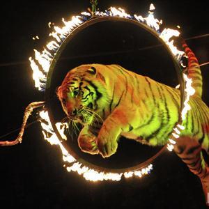 Цирки Лесного