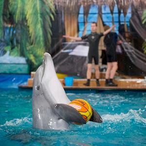 Дельфинарии, океанариумы Лесного