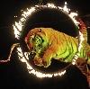 Цирки в Лесном